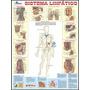 Mapa Corpo Humano Sistema Linfático 120 X 90 Cm Grande