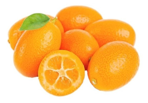 Frutal Enano Kumquat Importante Ver Descripción en venta en Cuernavaca  Morelos por sólo $ 255.00 - Ocompra.com Mexico