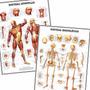 Kit 2 Mapas Esqueleto Músculos 60x80cm Para Decorar Sala