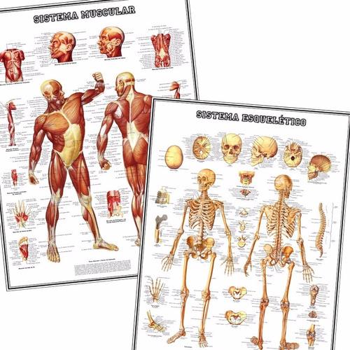 Kit 2 Mapas Esqueleto + Músculos 60x80cm Para Decorar Sala