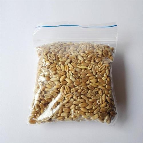 Semillas Repuesto De Pasto Gatuno, Hierba Pasto Para Gatos