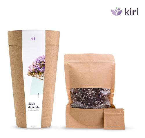 Urna Biodegradable Para Cenizas Y Planta De Árbol. Kiri Bio.