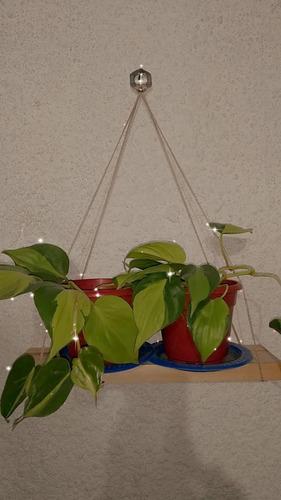 Plantas De Potus:neón, Limón O Plateado