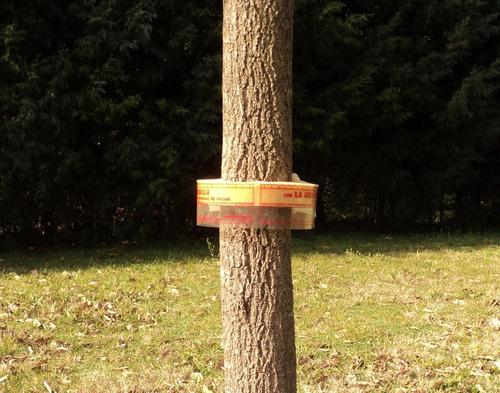 Abrazaderas Anti Hormigas Protección Contra Arboles Plantas