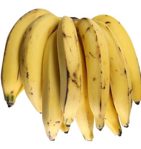 2  Mudas De Banana Da Terra Rizoma Orgânico..