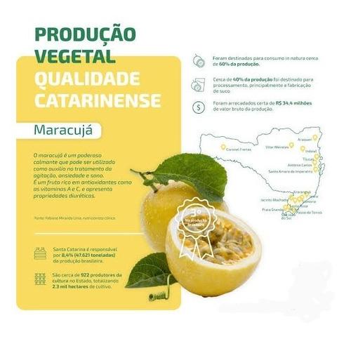 Semente Maracujá  Scs437 Catarina ( Melhor Do Brasil)