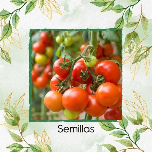 25 Semillas Tomate Cherry Orgánico Para Maceta O Huerta