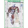 Mapa Músculo Exercício Academia Treino Corpo Humano Anatomia