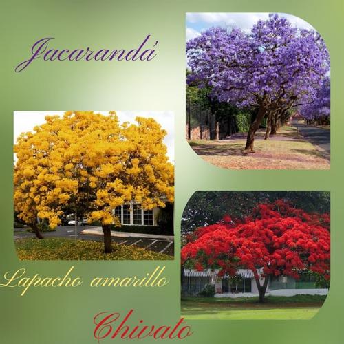 Combo Jacarandá , Lapacho Amarillo , Chivato , Envío Gratis