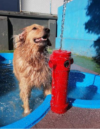 Piscina Para Cães Em Formato De Osso Com Deck E Hydrante.