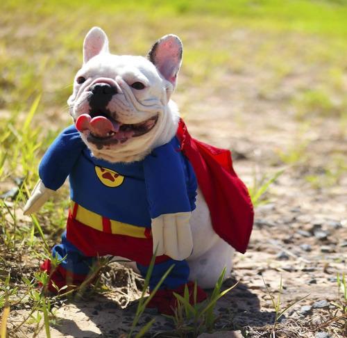 Fantasia Super Dog Agridoce Pet Man Homem Festa