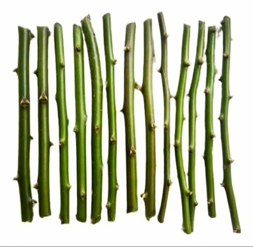 50estacas Ora-pro-nobis Legítima,folhas Suculentas25%protein