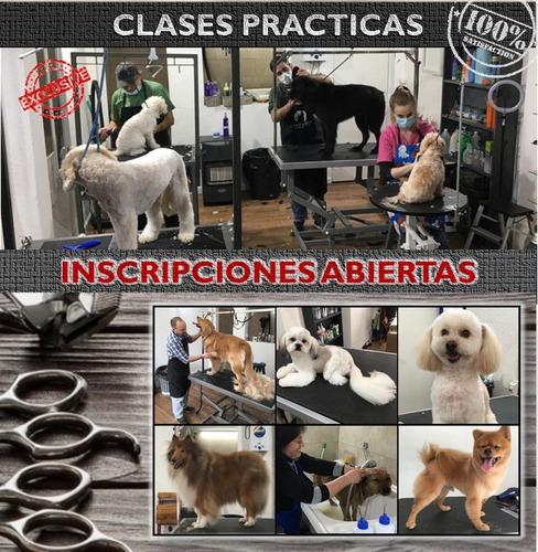 Curso De Peluquería Canina Inicial - Jul-set 2021