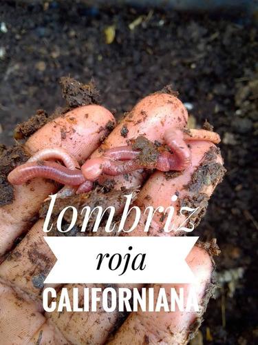 Lombriz Roja Californiana Para Bio Huertos Orgánico & Humus