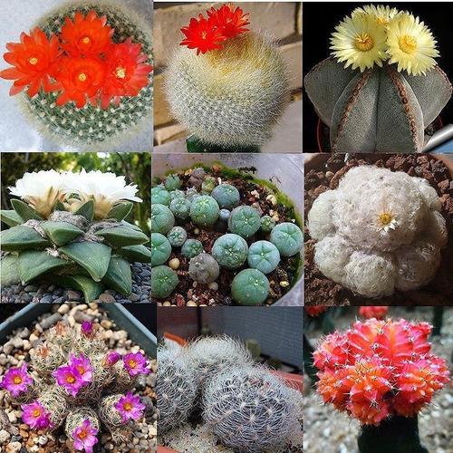 Semillas De Cactus Exóticos Mix