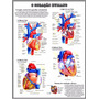 Poster Hd Anatomia Coração 60x80cm Medicina Pra Decorar Sala