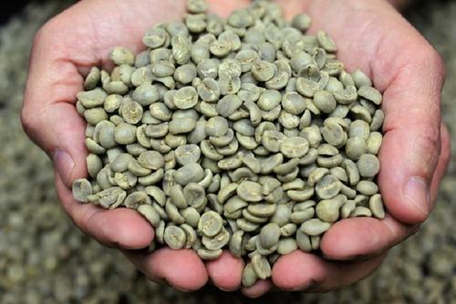 Café Cru Variedade Arara - Nova Safra 2021 Sul De Minas 20kg