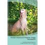 Persian Greyhound Presents