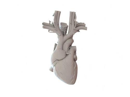 Coração Anatômico Cardiologia