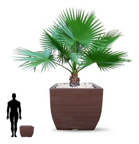 1 Vaso Grande De Polietileno P/ Planta Frutifera Muda 45x50