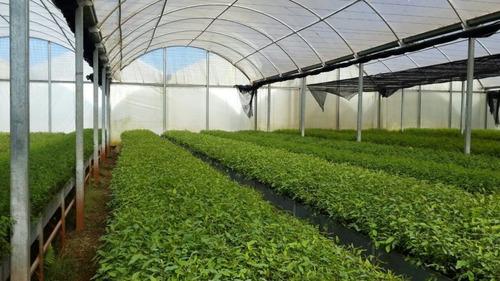 Nylon Invernaculo Agropecuario Uv - Ancho 4,20 Mts. Promo