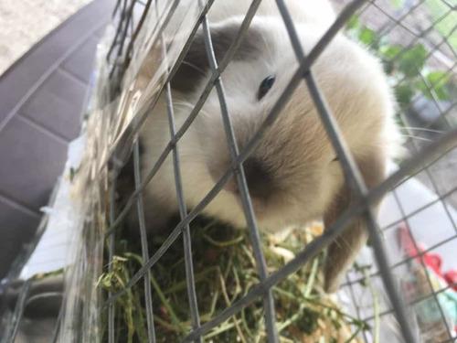 Jaulas Transportadoras Conejos