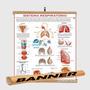 Mapa Do Corpo Humano Sistema Respiratório Banner Laminado