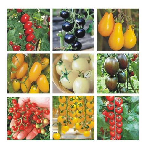 Super Combo Semillas Tomates Cherrys Raros!! 9 Variedades!
