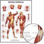 Poster Músculos 65x100cm Fisioterapia Enfeite Para Casa Sala