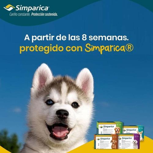 Simparica Control Pulgas Garrapatas Y Sarna En Perros