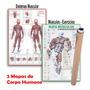 Kit 2 Mapas Sistema Muscular Exercícios Academia Enrolado
