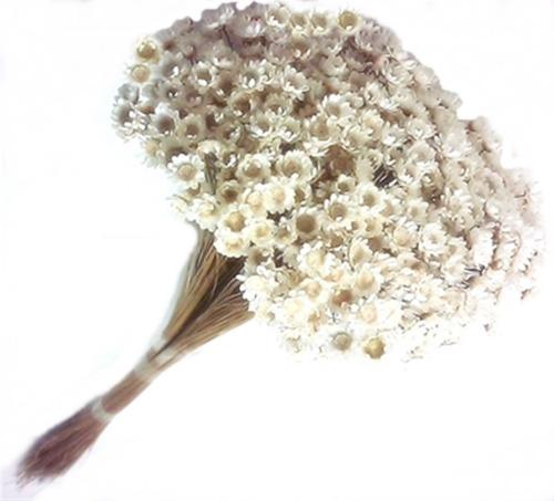 Flores Sempre Vivas Lembrancinhas Decorações Artesanato