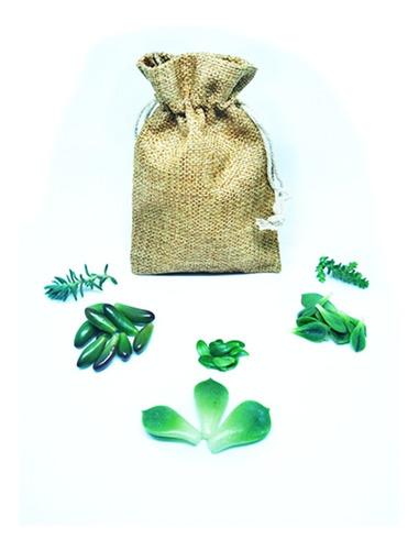 Semillas De Suculentas (dificultad: Muy Fácil) Pack 53uni