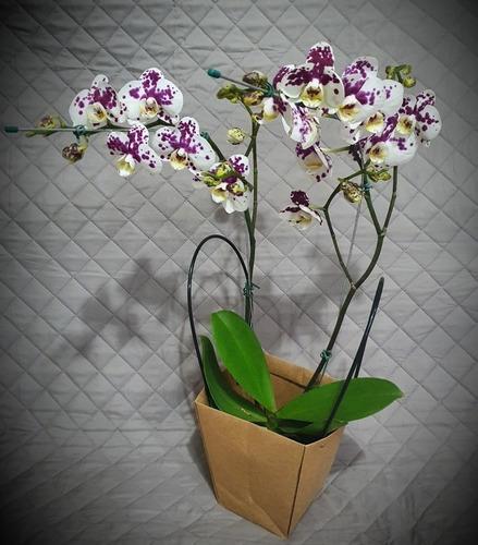 Orquideas C/maceta Y Decorado.