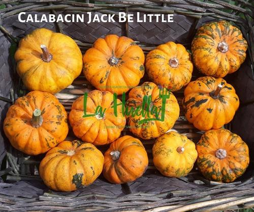 Semillas Orgánicas Calabazas Y Calabacines- La Huella Huerta