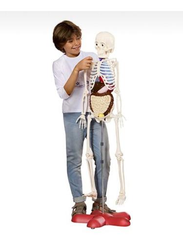 Esqueleto Humano De Plástico