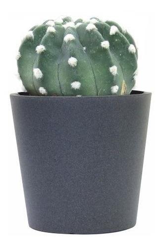 Cactus De Colección