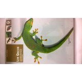 Gecos Libro Geckos