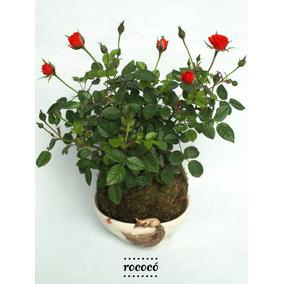 Kokedama Flores Rosa Rococo Regalo Navidad Jardin Redondo