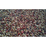 Estilosante Campo Grande Recupera Pastagens- 1 Kg Sementes