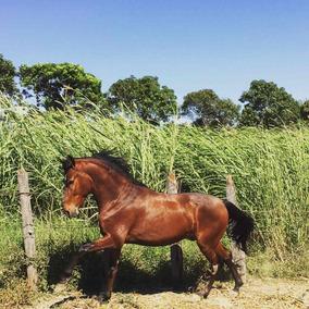 Cavalo Garanhão Mangalarga Marchador Aceito Proposta Troca