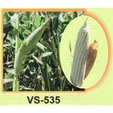 60mil Semillas Maiz Vs 535 Para Grano De Temporal