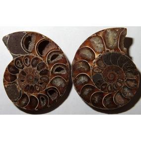 Piedra Preciosa Mineralizado Color Opalo Antigua Museo Fosil