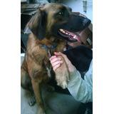 Cachorros, Perros Y Gatos En Adopción