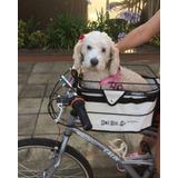 Cestinha Cadeirinha Bike Dog Para Cachorro - Altmayer Al-198