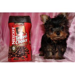 Perros Chiquitos Perros De Raza En Mercado Libre Argentina