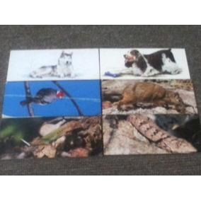 Lote Com 4 Cards Sertões E 2 Cães De Raça Surpresa