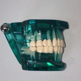 Manequim Odontológico Arcada Dentária Dentes Promo 025.074