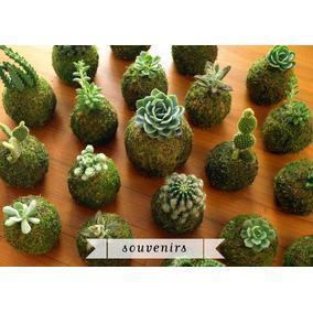 Kokedama Cactus Regalo Navidad Empresarial Jardin Redondo