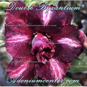 Kit 30 Sementes Rosa Do Deserto Adenium Obesum Mix 30 Cores